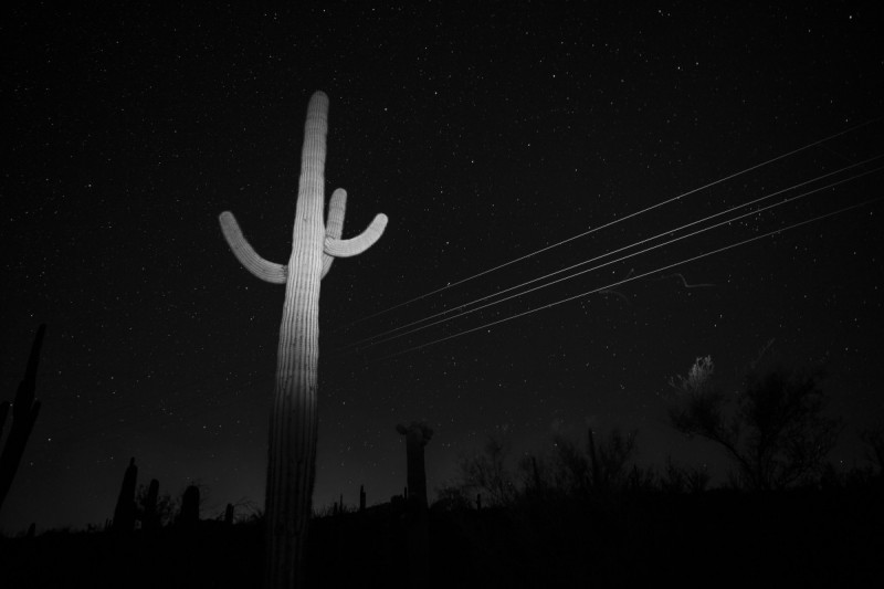 Saguaro Power Lines and Bat Trail ©Bil Zelman